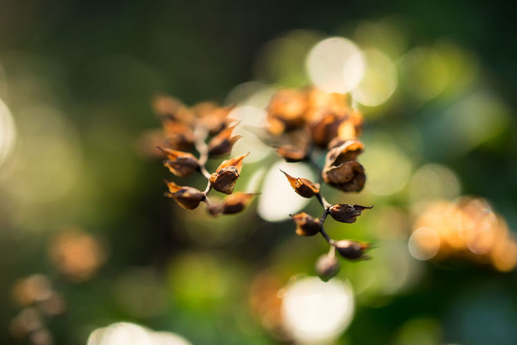 Beauty In Nature Bokeh Bokeh Photography Close Up Close-up Day Freshness Growth Morning Light Nature New Year No People Outdoors Plant