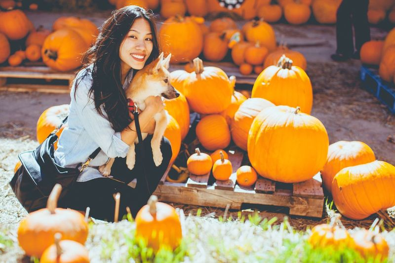 Portrait Of Smiling Young Woman With Dog Crouching Amidst Pumpkins During Halloween