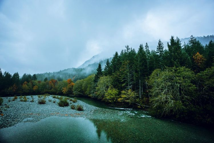 Foggy Fall Day In Vancouver Island Nature_collection Nature On Your Doorstep Nature Photography Awesome_nature_shots Nature_perfection EyeEmBestPics EyeEm Nature Lover Ig_captures EyeEm Best Shots Awesome_nature_shots Nature_perfection Tree Cloud - Sky Plant Sky Water Beauty In Nature Nature No People Lake Outdoors Scenics - Nature Tranquility