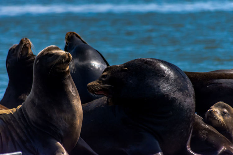 Close-up of sea lions