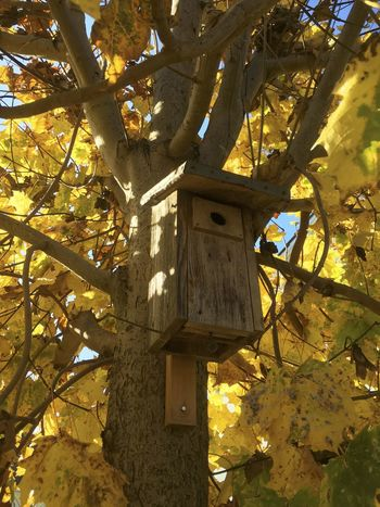 Sweet Home for Birds! Architecture Bird House Birdhouse Close-up Day Low Angle View Nature No People Outdoors Sky Tree