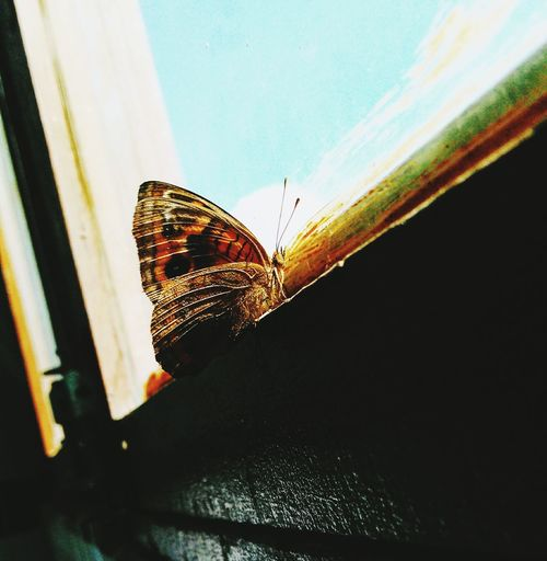 Perfect Moment Beautiful ♥ Borboletas
