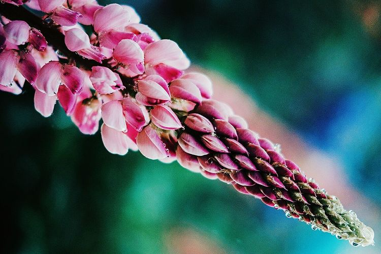 Beauty In Nature Flower Nature Pink Color Outdoors Growth Flower Head VSCOFragility Photographer минимализм Minimalism альметьевск Vscocam Midifoto Fujifilm Russia фотограф Teamfuji макро Macro Flowers Россия No People Close-up