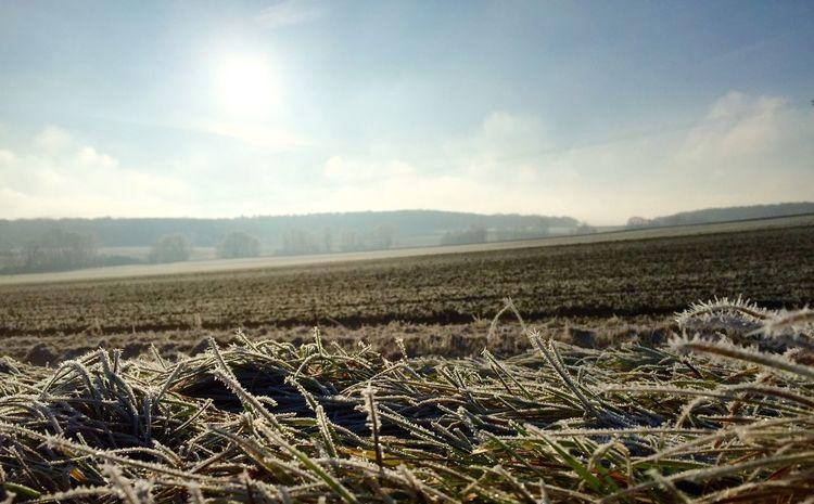 Winter Cold Wintertime