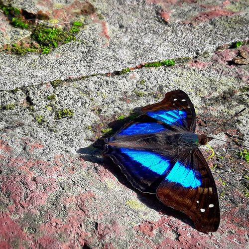 Butterfly One Animal Animal Themes Day Nature