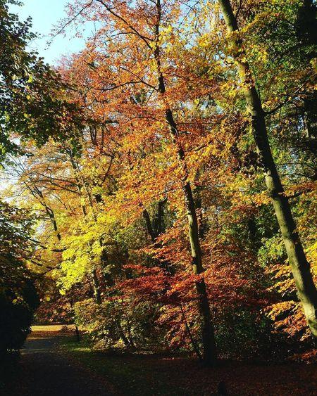 Arnhem Parksonsbeek Nature Autumn Nature Photography Naturelovers Naturewalk  Lovelyview Colors Park