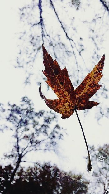 Break The Mold Every leaf tells a story if you look close enough. Leaf Nature Change Leaves Weather Close-up Outdoors Rain Fragility Diversity Photography Peace Springtime Tree Water Window Cold Temperature Tranquility Beauty Break The Mold