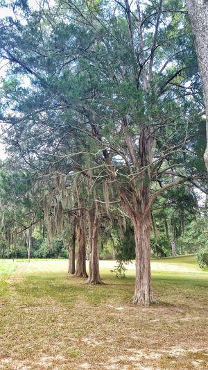 Protecting Where We Play Natchez Trace Mississippi Summer Enjoying Life Mount Locust