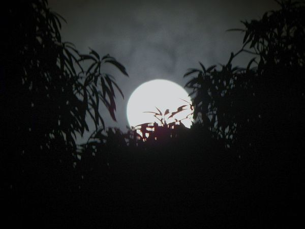 Light Dark... Silhouette Plant Tranquil Scene Beauty In Nature Moon Dark Outdoors Bright Beauty In Nature Greatlife Nightphotography Nikonphotography Taking Photos EyeEm Gallery Thinking About Life Glowing Full Moon Space Exploration Alone Time HunterClouds