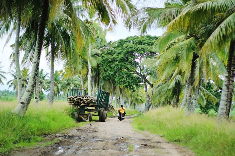 Rough road trippin' A New Beginning Motor Motorcycle Rough Road Rough Road Leads To Great Adventures Coconut Tree Negros Occidental Philippines Summer Road Tripping Tree Men Bamboo - Plant Sky Grass Green Color Bicycle Riding Mountain Bike Land Vehicle Uphill Moving Empty Road