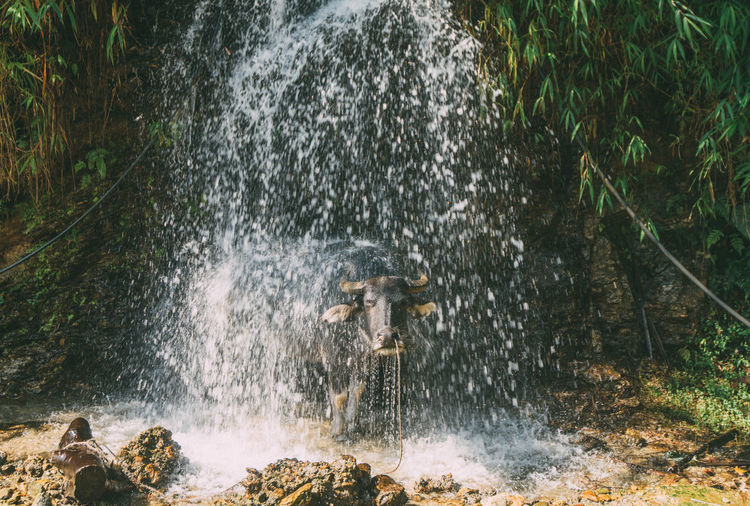 Water splashing in forest