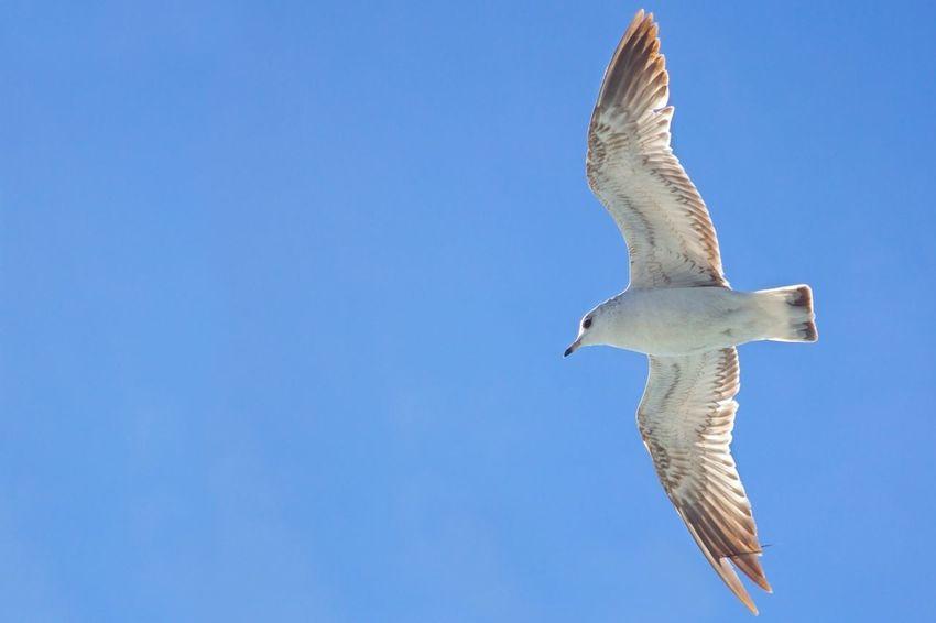 Seagulls Enjoying Life Bisgen EyeEm Best Shots