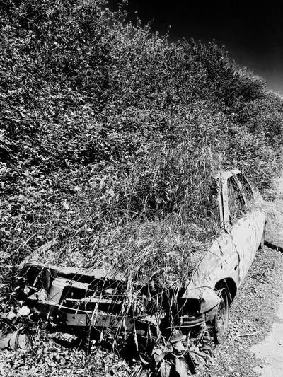 «Human vs Nature 1» France Blackandwhite Photography Black & White Blackandwhite Black Notre Dame Des Landes Zad Urbexphotography Urbex Car Abandoned No People Day Outdoors Nature EyeEmNewHere