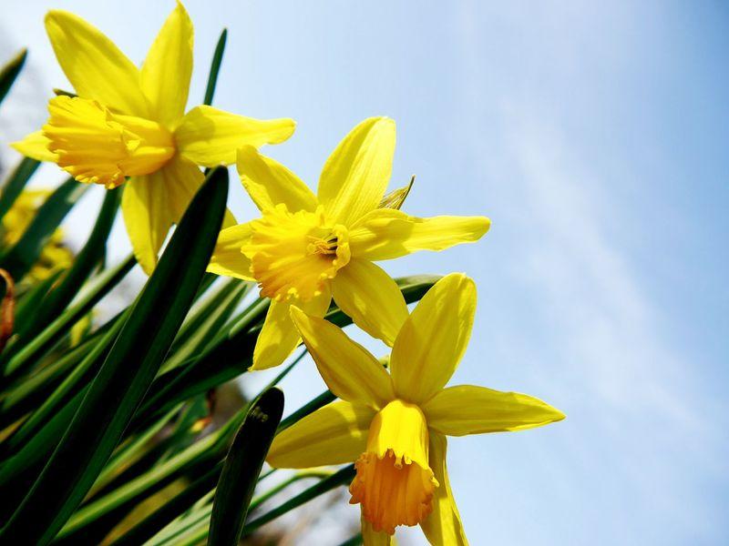 Spring! Ladyphotographerofthemonth Spring Flowers Urban 4 Filter EyeEm Nature Lover Lemon By Motorola