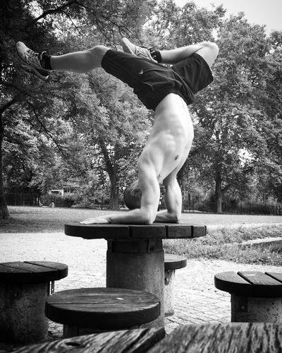 Yoga in park, playing around :) Balance Tree One Person Day Outdoors Skill  Flexibility Fun Yoga Park Table Pinchamayurasana Headlong Artistic Balancing Act Balancing Adult Real People Outdoor Photography Posing Daytime Motion One Man Only Nature Ogi Jovic