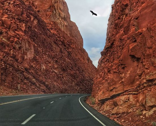 Road Transportation Nature The Way Forward Scenics Day Mountain Animal Themes No People Animals In The Wild Beauty In Nature Outdoors One Animal Sky Bird Mammal