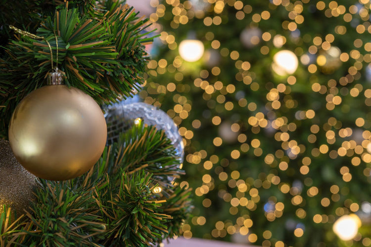 Close-up of christmas tree against lights