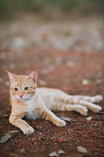 life with cat Cat Domestic Cat Domestic Pets Feline Domestic Animals Mammal One Animal Portrait Vertebrate Day Relaxation Looking Selective Focus Full Length Whisker Looking At Camera No People Ginger Cat Lifestyles Week On Eyeem Nikonphotography Nikond750 EyeEm Best Shots