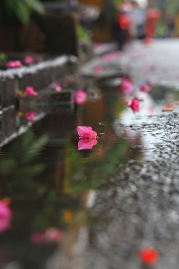 After rain... After The Rain Hoian, Vietnam Sadly Wet Flower Flowers Fall Rain Flower Water Leaf Pink Color Multi Colored Autumn Wet Reflection City Close-up