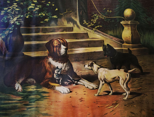 """""""The Protector"""" """" Saint Bernard dog"""" Saint Bernard Dog The Protector Mammal Animal Themes Animal Domestic Animals Domestic Pets Group Of Animals Canine Dog Vertebrate Relaxation Two Animals No People Lying Down Togetherness Resting Indoors  Nature Animal Family"""
