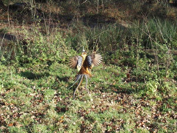Week end en Sologne Pheasant Sologne