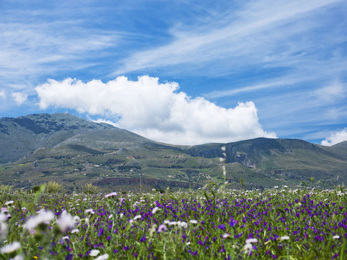 Scenic view of flowers blooming on landscape against blue sky