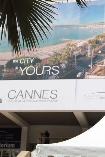 Cannes Cannes Film Festival Cannes, France CannesFilmFestival Côte D'Azur France Movies Palms Cinema Cinema Theatre Palm Branch Palm Tree Branch Summer Каннский кинофестиваль канны Кино Кинотеатр  Лазурный берег кинофестиваль лето фильмы франция