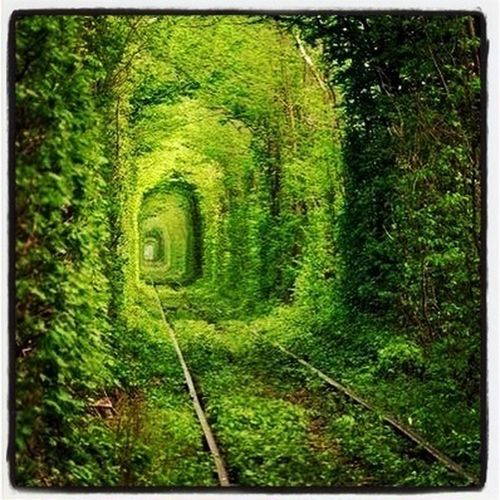 Love Green Tunnel LoveTunnel