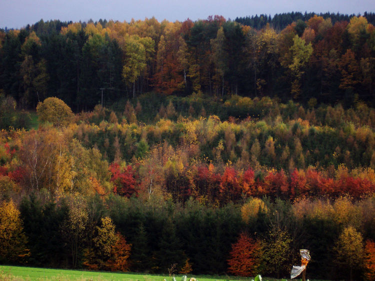 Autumn Beauty In Nature Change Forest Herbst, Laub, Herbstlaub, Herbstfarben, Herbstleuchten, Herbstspaziergang, Landscape Outdoors Tranquil Scene