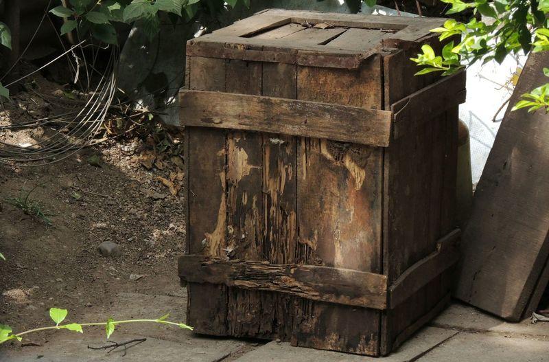 Box wood Wood -