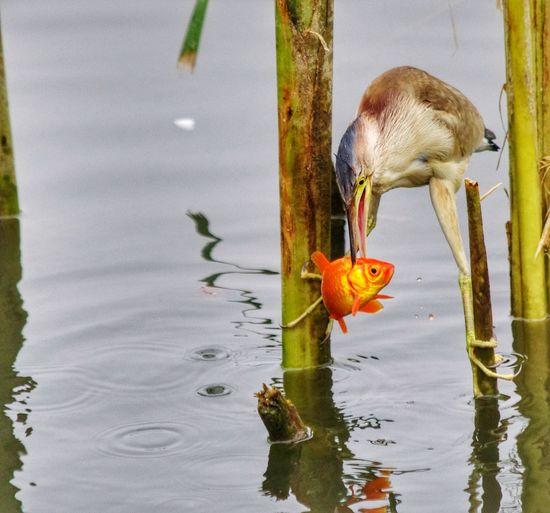 Close-up of bird fishing in lake