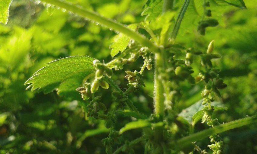 Nofilter Plant