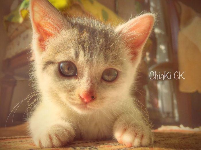 Animals Cat Cute Cat Cute Cat.  My Cat My Pets Cute Cats Cute Pets Color Photography Color Portrait