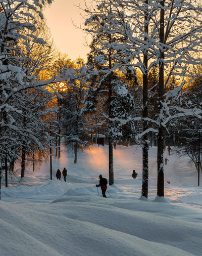 Snow Cold Temperature Winter Leisure Activity Winter Sport Outdoors Warm Clothing Nature Sunset Skiing Nordic Skiing Light Beam Sunlight Beam Bucolic