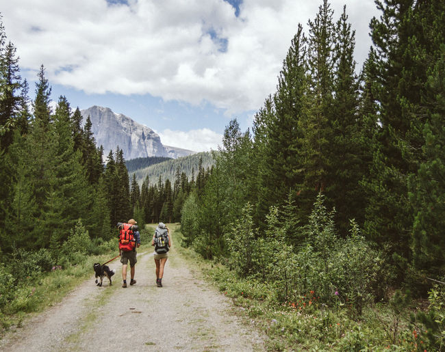Rear view of people walking with dog on pathway amidst trees at mt assiniboine