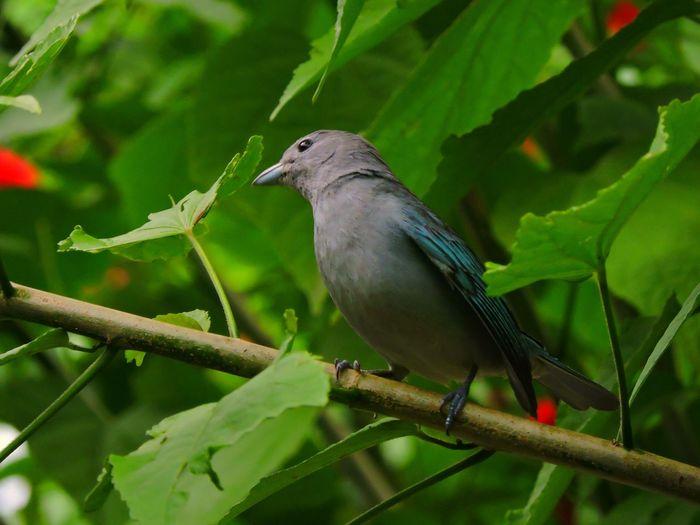 Bird Perching On Leaf