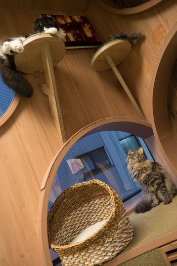 Animal Themes Cat Catcaffe Day Domestic Animals High Angle View Indoors  Indoors  Mammal No People Pets
