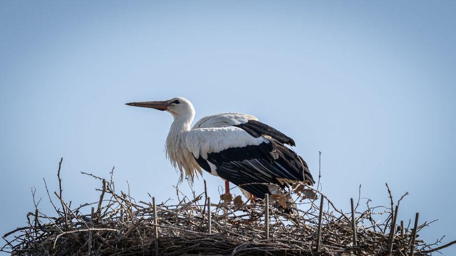 Bird perching on nest against clear sky