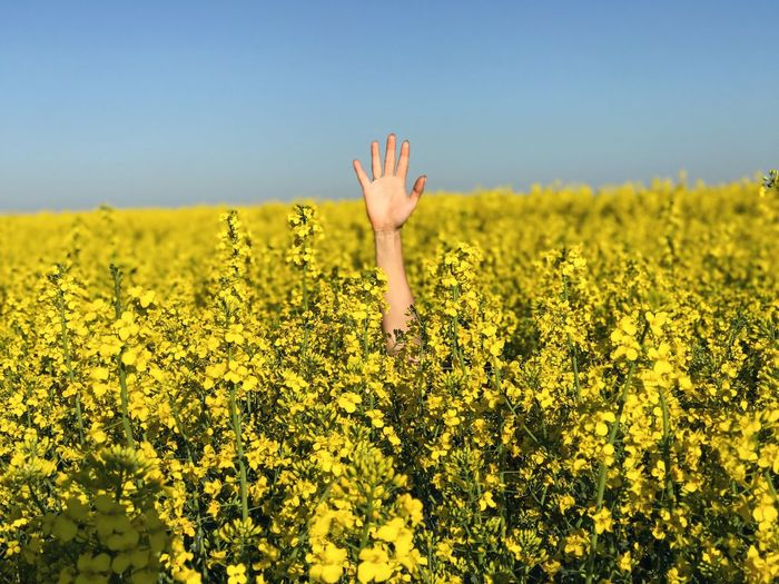 Cropped hand of woman amidst yellow flowers against sky