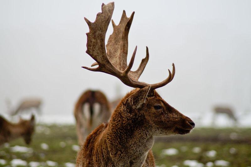 Close-up of deer against sky