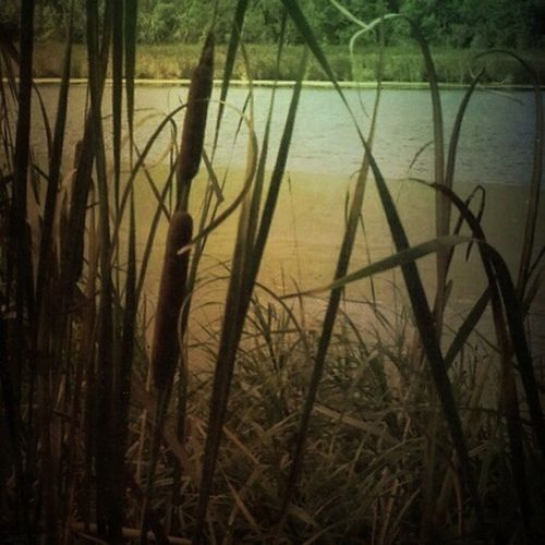We sat on a bench in the midst of tangles of cattails, watching a little pond of so much silence, a bird flying by was startling. EyeEm Nature Lover Lake View Plant Tadaa