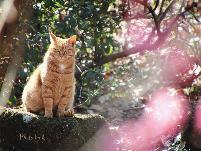 Cat Stray Cat 野良猫 Cat♡ 猫 Cat Lovers 茶猫 茶トラ猫 Animal Playing With The Animals