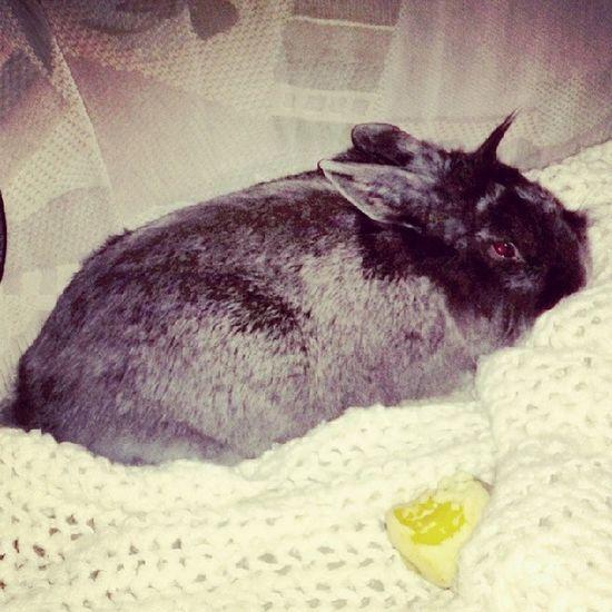 Unicorn bunny ^_^ 토끼