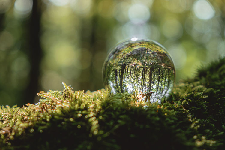 crystal ball lies on a moss in the forest. concept and theme of nature, environmental protection.