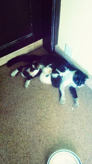 cat with kitten outside my office,........cute