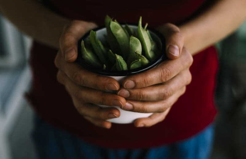 Close-Up Of Hands Holding Potted Plant