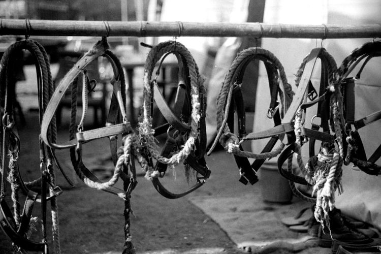 Close-up of bridles hanging on bamboo
