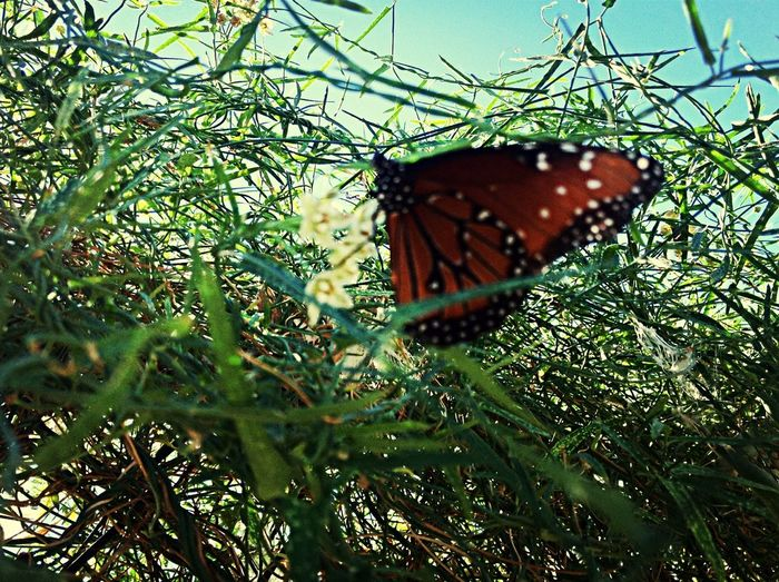 Mariposas Monarcas First Eyeem Photo