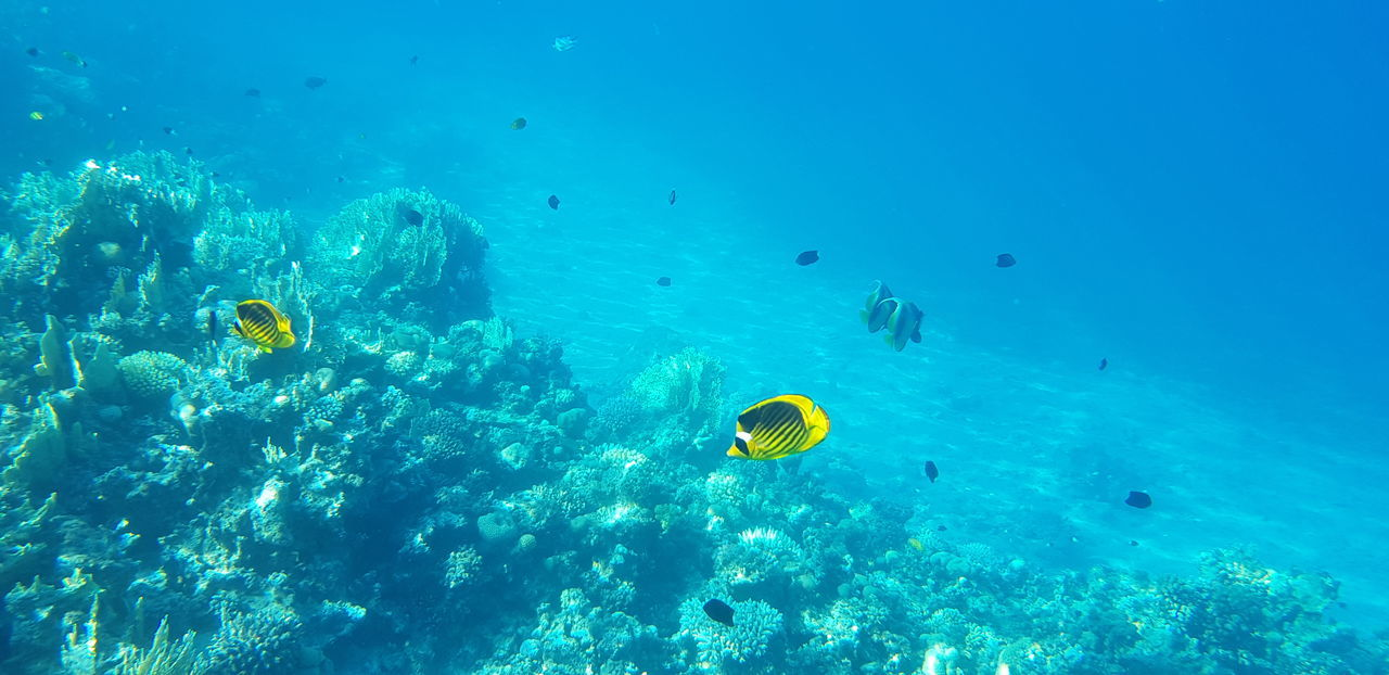 Animal Animal Themes Animal Wildlife Animals In The Wild Beauty In Nature Blue Coral Fish Invertebrate Marine Nature Outdoors Sea Sea Life Snorkeling Swimming Turquoise Colored UnderSea Underwater Underwater Diving Vertebrate Water