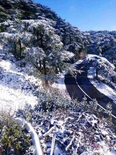 Ch'reaa blida-Algeria Cold Temperature Water Winter Snow Day Outdoors No People Nature Tree Beauty In Nature Close-up Sky Chriaa Blida BliDa 2014 Sahara Desert EyeEm Nature Lover EyeEmBestPics Algeria Algeria. Algeria Photography Beauty In Nature Nature Snow❄⛄ Hiver2017